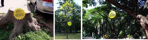 treesforfree-campaign.jpg