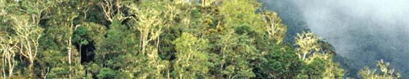 aktion-rettetdenregenwald.jpg