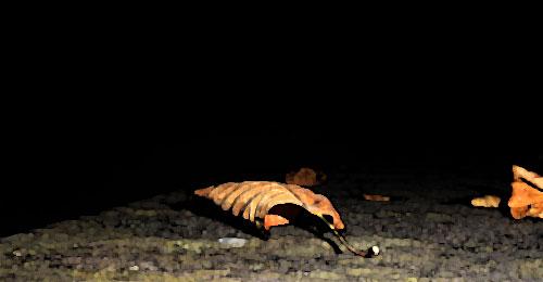 Herbstblatt_Waldili_pixelio