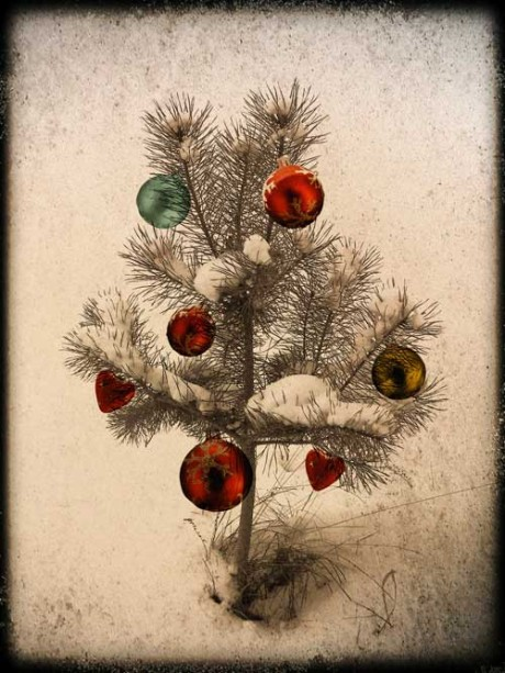 Ökologisch korrekter Weihnachtsbaum