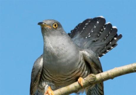 Vögel retten keine Pestizide BUND