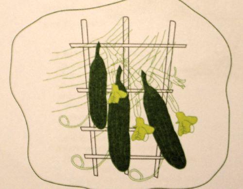 selbst anbauen zucchini f r eine bessere welt. Black Bedroom Furniture Sets. Home Design Ideas