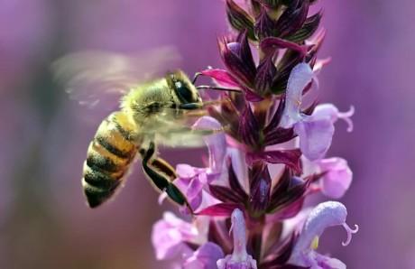 Bienensterben verhindern, Bild: Luise