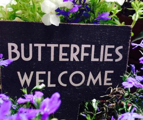 Welcome Butterflies! Vertikalen Stadtgarten selbst bauen