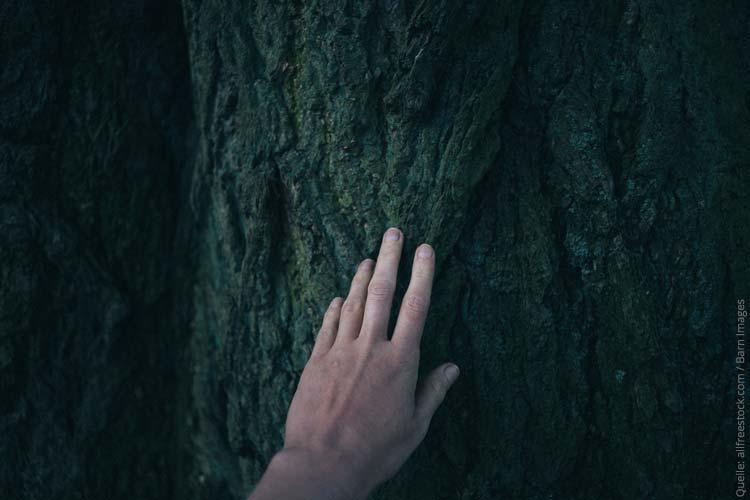 Nachhaltigkeitsblog lässt Bäume wachsen