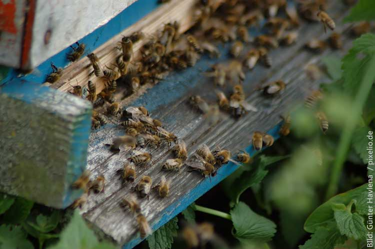 Bienensterben stoppen: 10 Dinge, die Du tun kannst