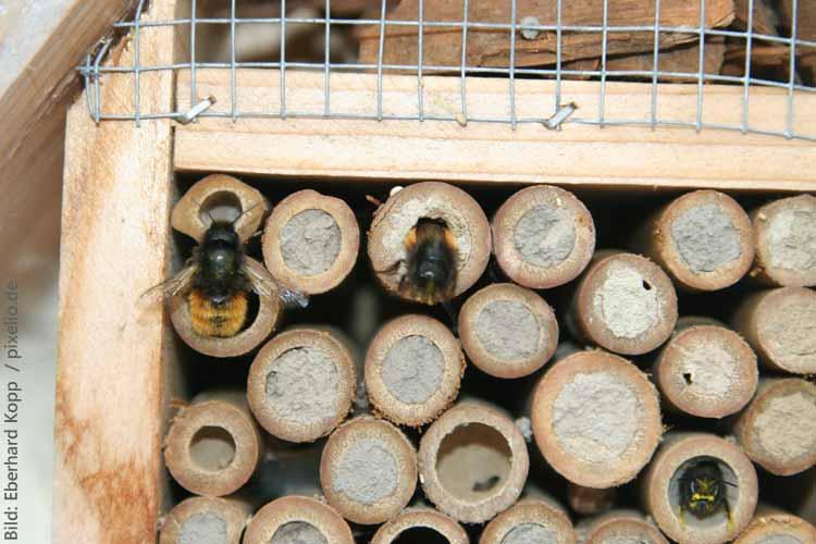 Bienen schützen und ein Bienenhotel bauen