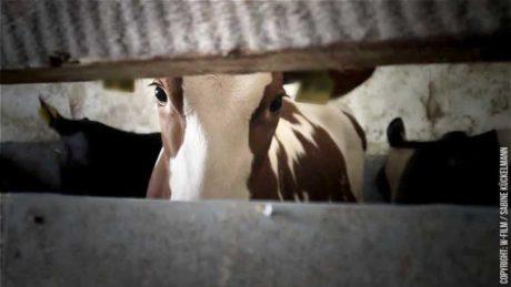 Kinotipp: Im Namen der Tiere