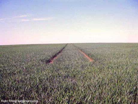 Monokultur in der Landwirtschaft