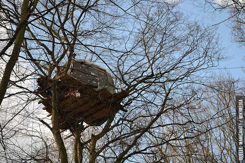 Wald statt Kohle: Die Räumung des Hambacher Forst