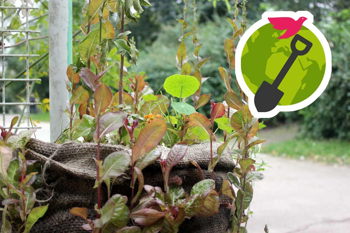 Gärtnern für eine bessere Welt: Interaktive Lesung